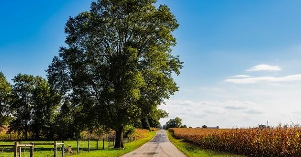 An image of a country road passing a cornfield, representing the real property disputes that can occur as a result of adverse possession in Indiana.